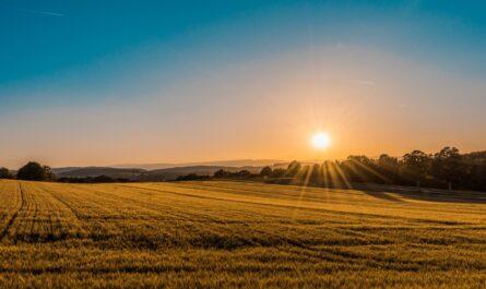 Vitamín D můžete do svého těla dostat skrze sluneční paprky.